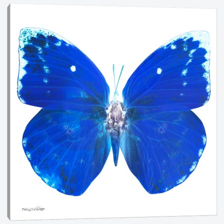 Miss Butterfly Catopsilia X-Ray (White Edition) Canvas Print #PHD302} by Philippe Hugonnard Canvas Print