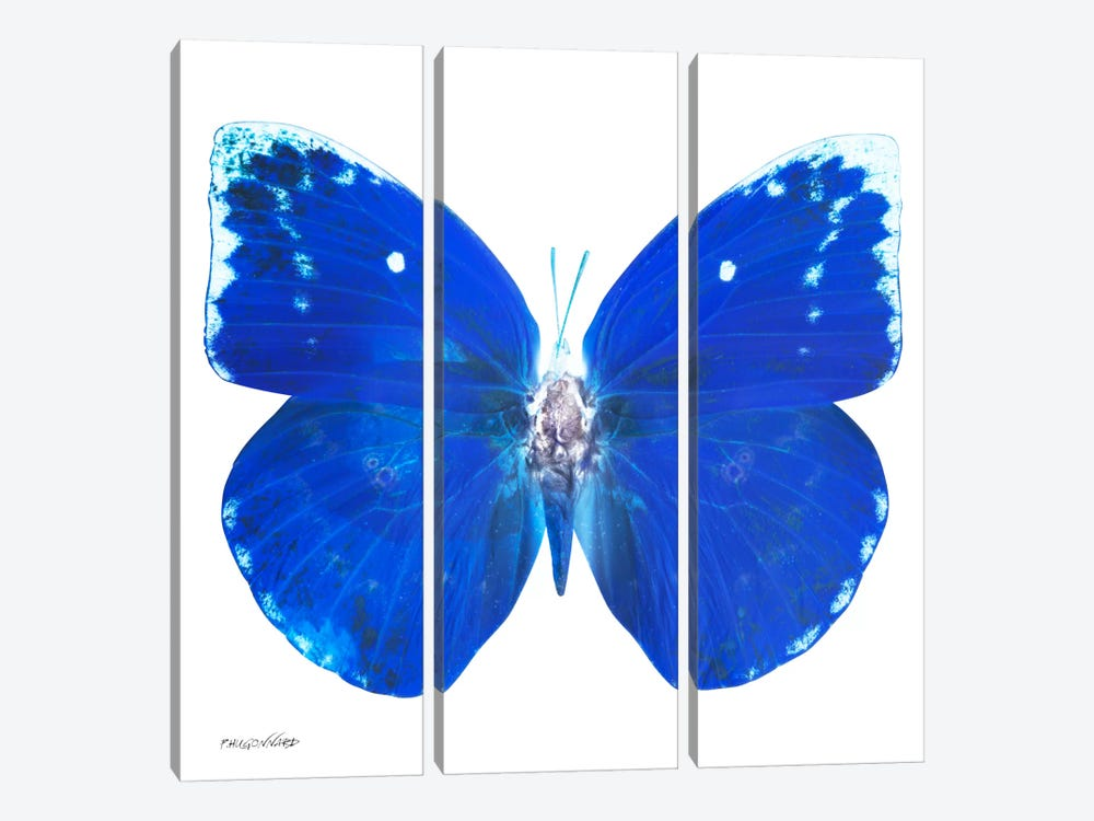 Miss Butterfly Catopsilia X-Ray (White Edition) by Philippe Hugonnard 3-piece Canvas Wall Art