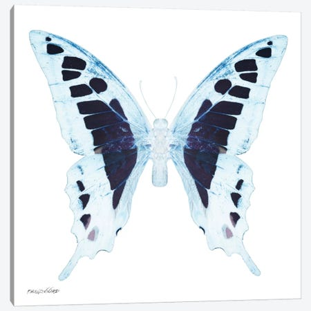 Miss Butterfly Cloanthus X-Ray (White Edition) Canvas Print #PHD303} by Philippe Hugonnard Art Print