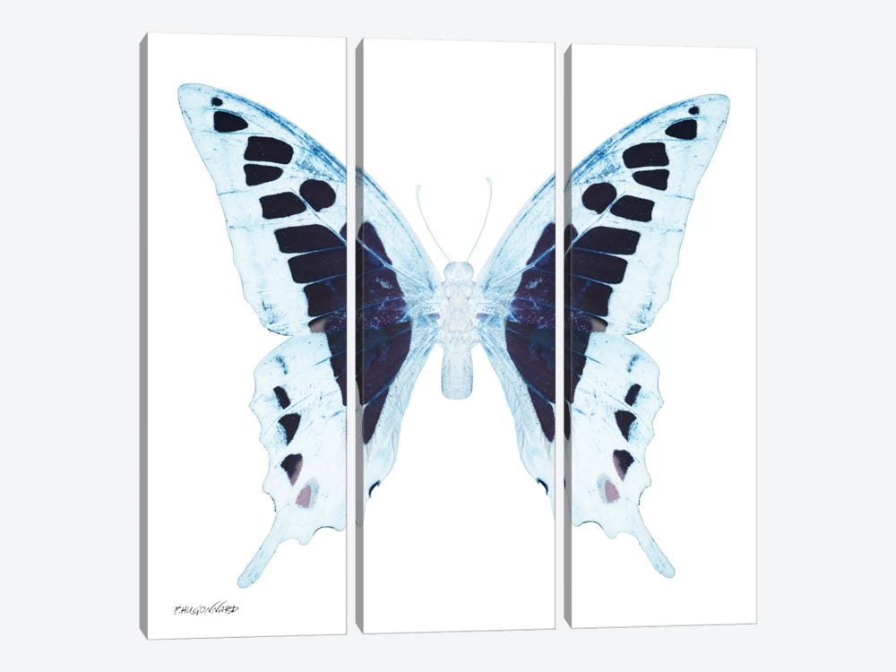 Miss Butterfly Cloanthus X-Ray (White Edition) by Philippe Hugonnard 3-piece Canvas Art Print