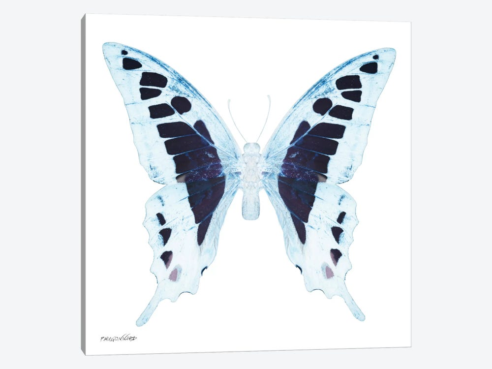 Miss Butterfly Cloanthus X-Ray (White Edition) by Philippe Hugonnard 1-piece Canvas Art Print