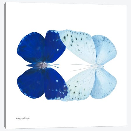 Miss Butterfly Catoploea Duo X-Ray (White Edition) Canvas Print #PHD304} by Philippe Hugonnard Canvas Wall Art
