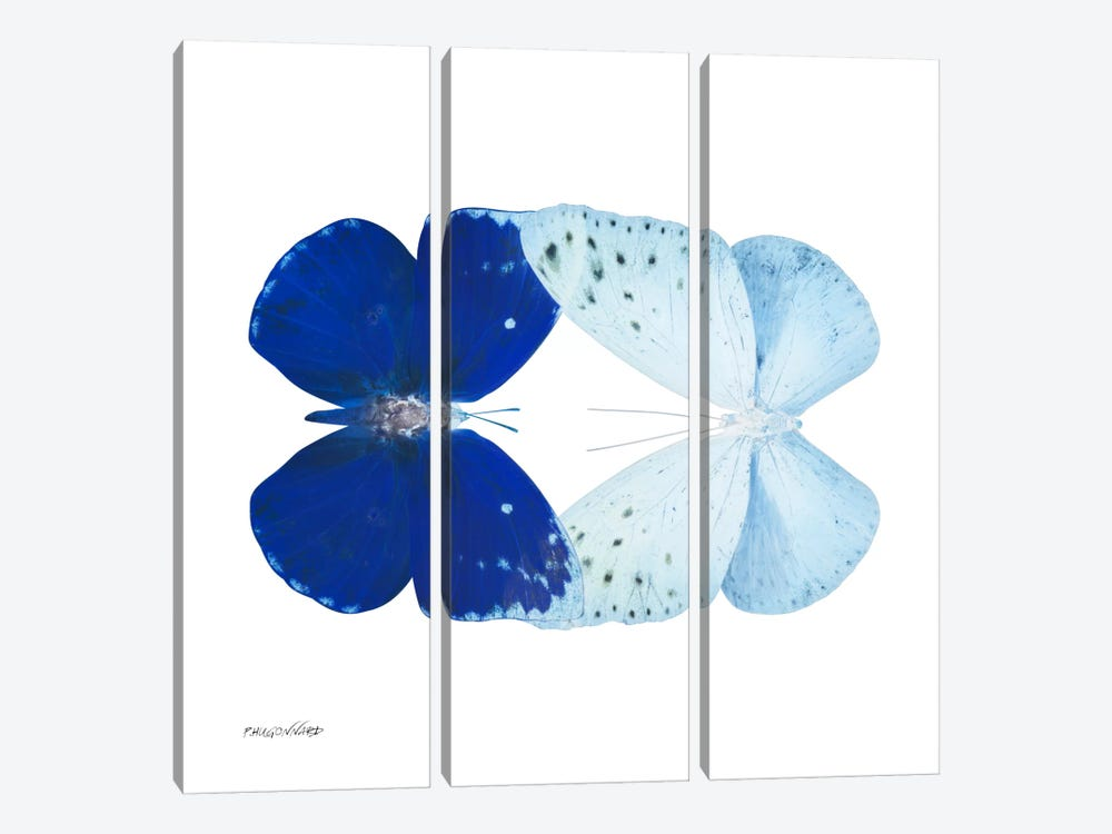Miss Butterfly Catoploea Duo X-Ray (White Edition) by Philippe Hugonnard 3-piece Canvas Art