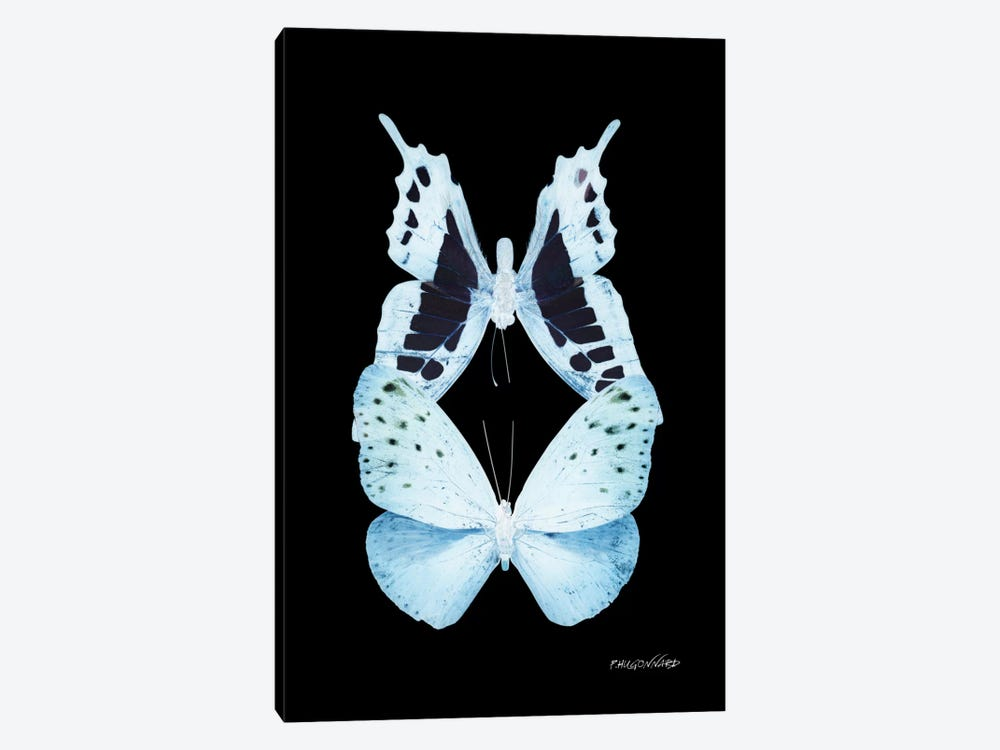 Miss Butterfly Euploanthus Duo X-Ray (Black Edition) by Philippe Hugonnard 1-piece Canvas Art Print