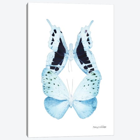 Miss Butterfly Euploanthus Duo X-Ray (White Edition) Canvas Print #PHD306} by Philippe Hugonnard Canvas Wall Art