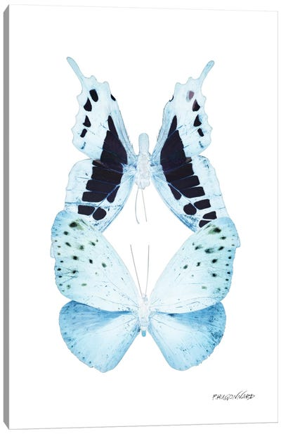 Miss Butterfly Euploanthus Duo X-Ray (White Edition) Canvas Art Print