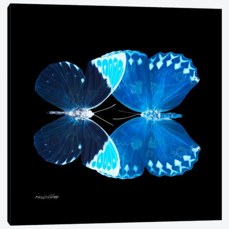 Miss Butterfly Formoia Duo X-Ray (Black Edition) Canvas Print #PHD307} by Philippe Hugonnard Canvas Artwork