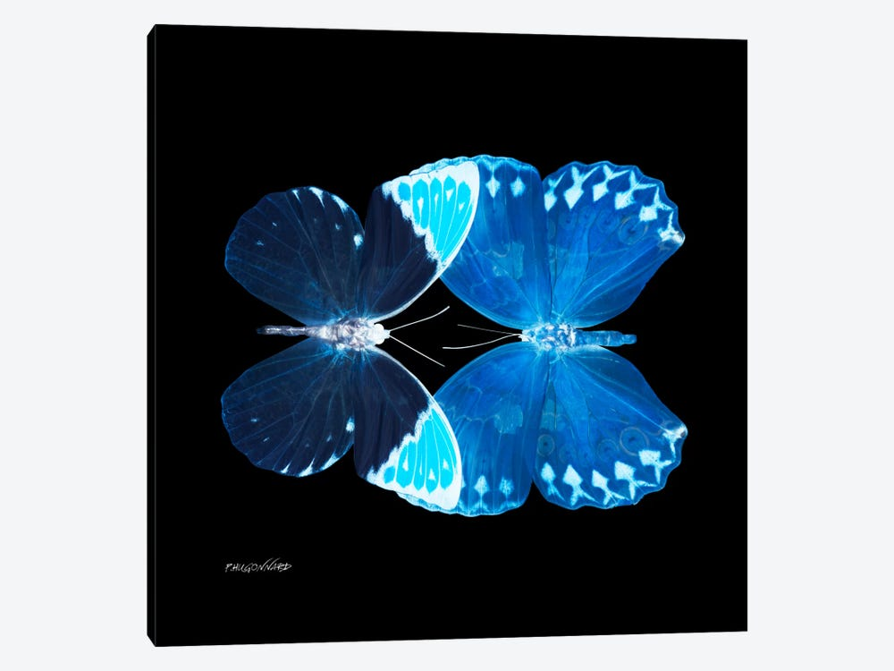 Miss Butterfly Formoia Duo X-Ray (Black Edition) by Philippe Hugonnard 1-piece Canvas Art Print
