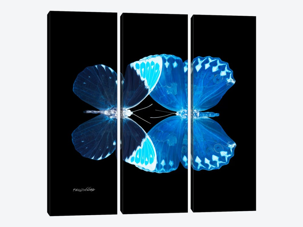 Miss Butterfly Formoia Duo X-Ray (Black Edition) by Philippe Hugonnard 3-piece Canvas Art Print