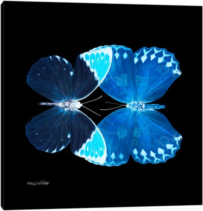 Miss Butterfly Formoia Duo X-Ray (Black Edition) Canvas Art Print