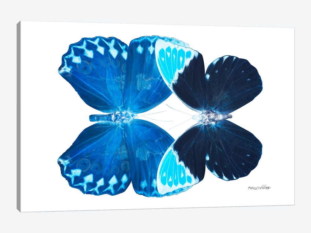 Miss Butterfly Heboformo Duo X-Ray (White Edition) by Philippe Hugonnard 1-piece Canvas Wall Art