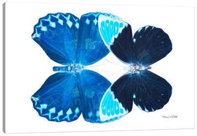 Miss Butterfly Heboformo Duo X-Ray (White Edition) Canvas Art Print
