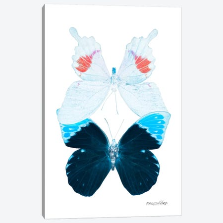 Miss Butterfly Hermosana Duo X-Ray (White Edition) Canvas Print #PHD309} by Philippe Hugonnard Canvas Print
