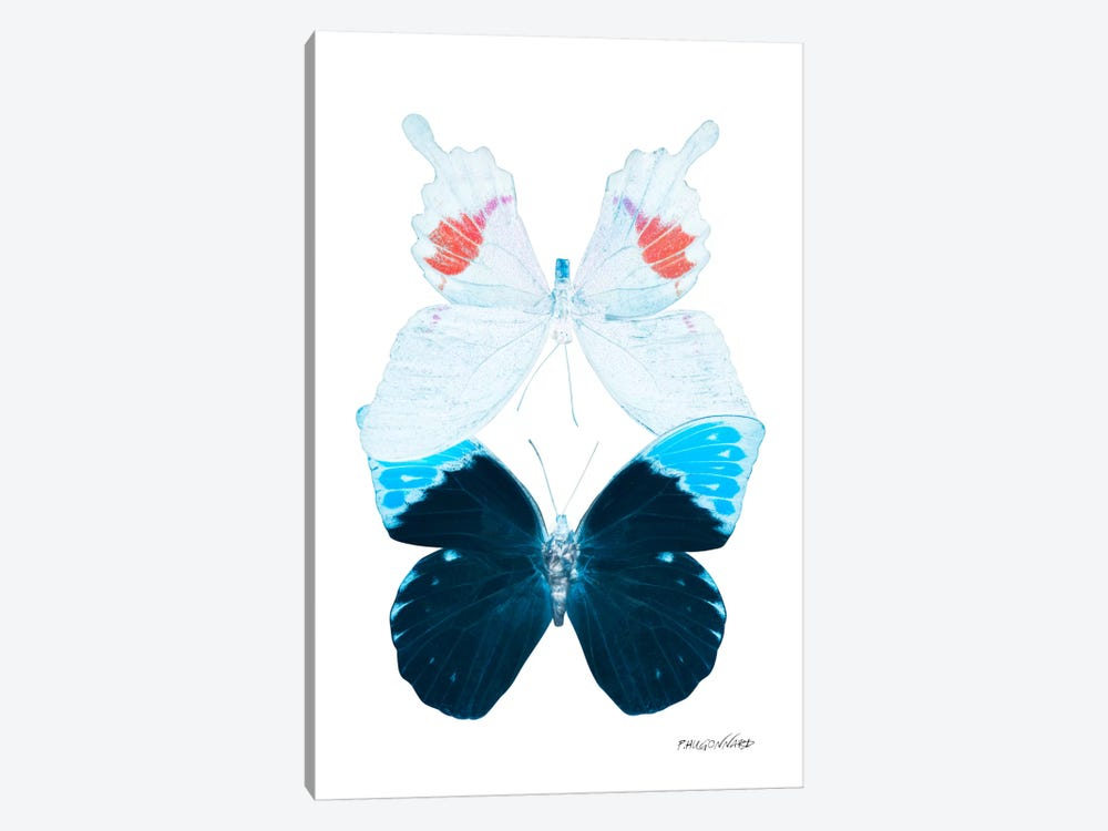 Miss Butterfly Hermosana Duo X-Ray (White Edition) by Philippe Hugonnard 1-piece Canvas Print