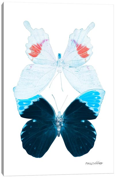 Miss Butterfly Hermosana Duo X-Ray (White Edition) Canvas Art Print