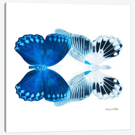 Miss Butterfly Memhowqua Duo X-Ray (White Edition) Canvas Print #PHD310} by Philippe Hugonnard Canvas Artwork