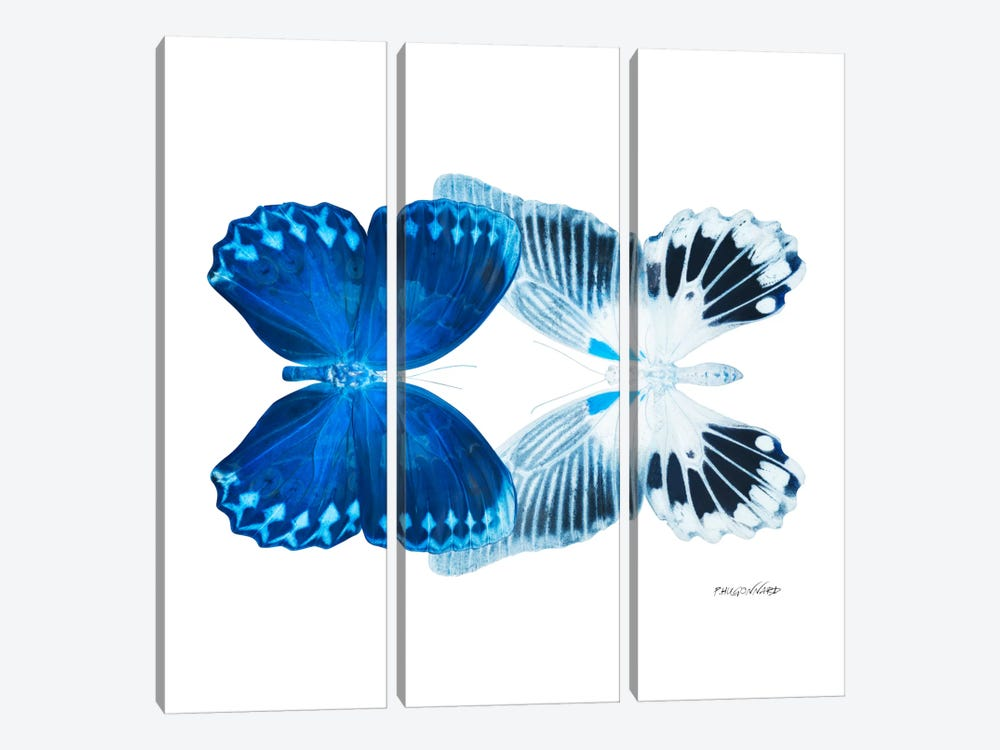 Miss Butterfly Memhowqua Duo X-Ray (White Edition) by Philippe Hugonnard 3-piece Art Print