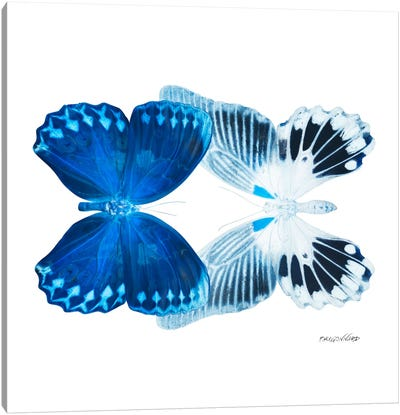 Miss Butterfly Memhowqua Duo X-Ray (White Edition) Canvas Art Print