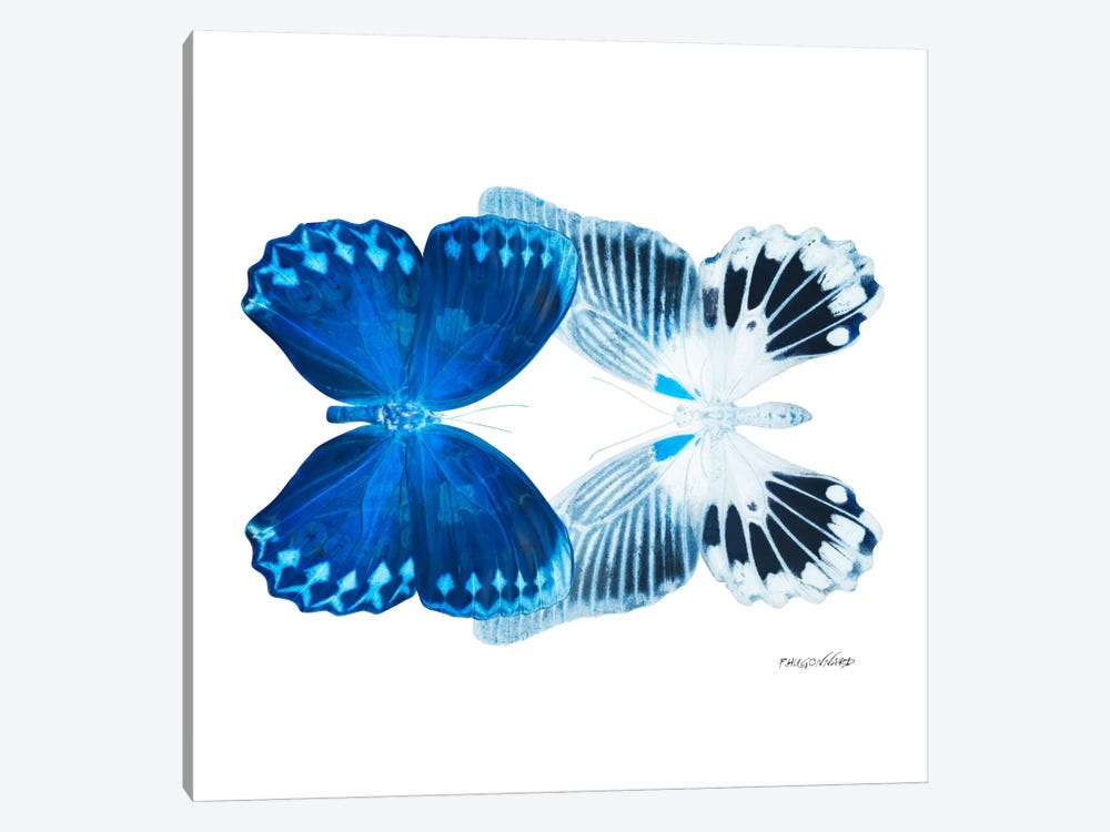 Miss Butterfly Memhowqua Duo X-Ray (White Edition) by Philippe Hugonnard 1-piece Art Print
