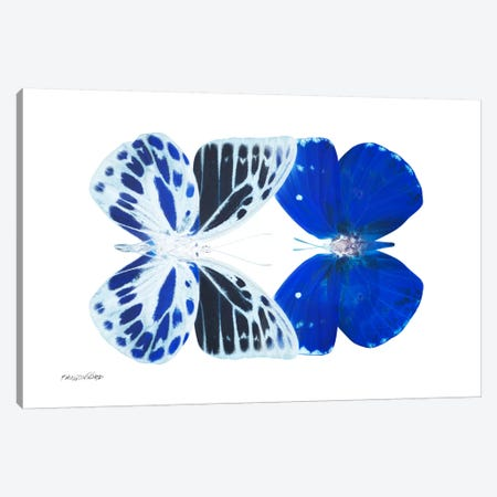Miss Butterfly Priopomia Duo X-Ray (White Edition) Canvas Print #PHD311} by Philippe Hugonnard Canvas Wall Art