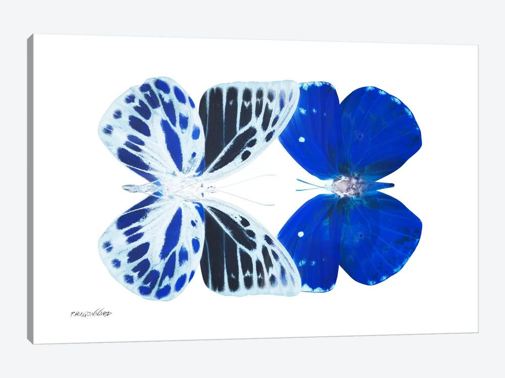 Miss Butterfly Priopomia Duo X-Ray (White Edition) by Philippe Hugonnard 1-piece Canvas Artwork