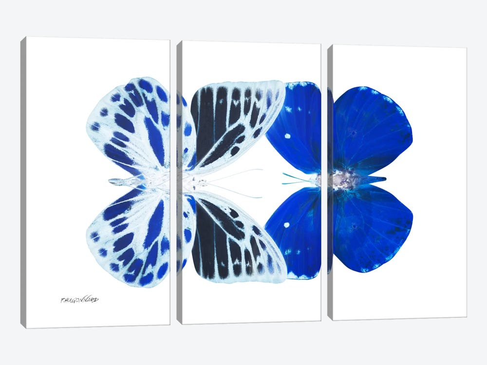 Miss Butterfly Priopomia Duo X-Ray (White Edition) by Philippe Hugonnard 3-piece Canvas Wall Art