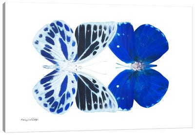 Miss Butterfly Priopomia Duo X-Ray (White Edition) Canvas Art Print