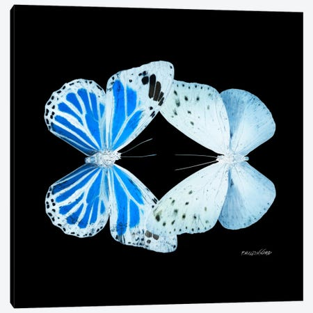 Miss Butterfly Salateuploea Duo X-Ray (Black Edition) Canvas Print #PHD312} by Philippe Hugonnard Canvas Artwork