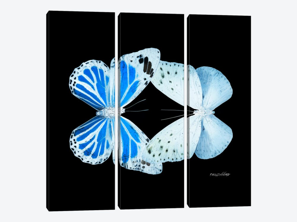 Miss Butterfly Salateuploea Duo X-Ray (Black Edition) by Philippe Hugonnard 3-piece Canvas Art Print