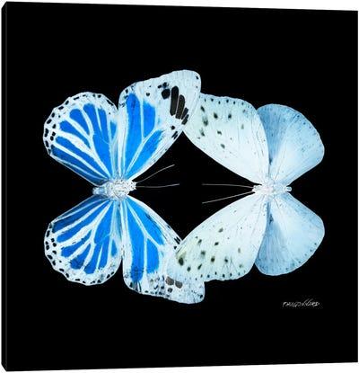 Miss Butterfly Salateuploea Duo X-Ray (Black Edition) Canvas Art Print