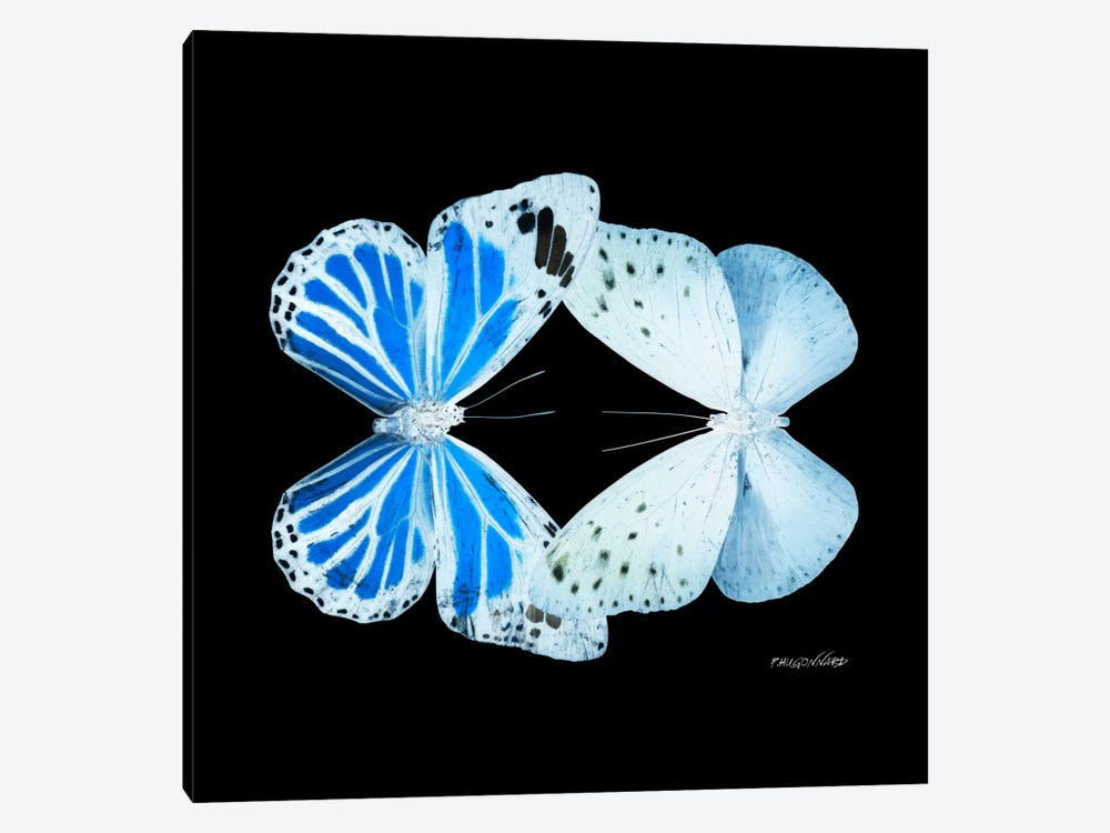 Miss Butterfly Salateuploea Duo X-Ray (Black Edition) by Philippe Hugonnard 1-piece Canvas Print