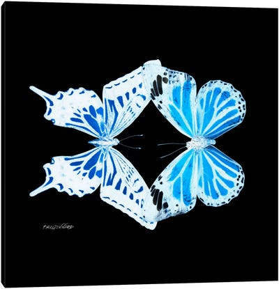 Miss Butterfly Xugenutia Duo X-Ray (Black Edition) Canvas Art Print