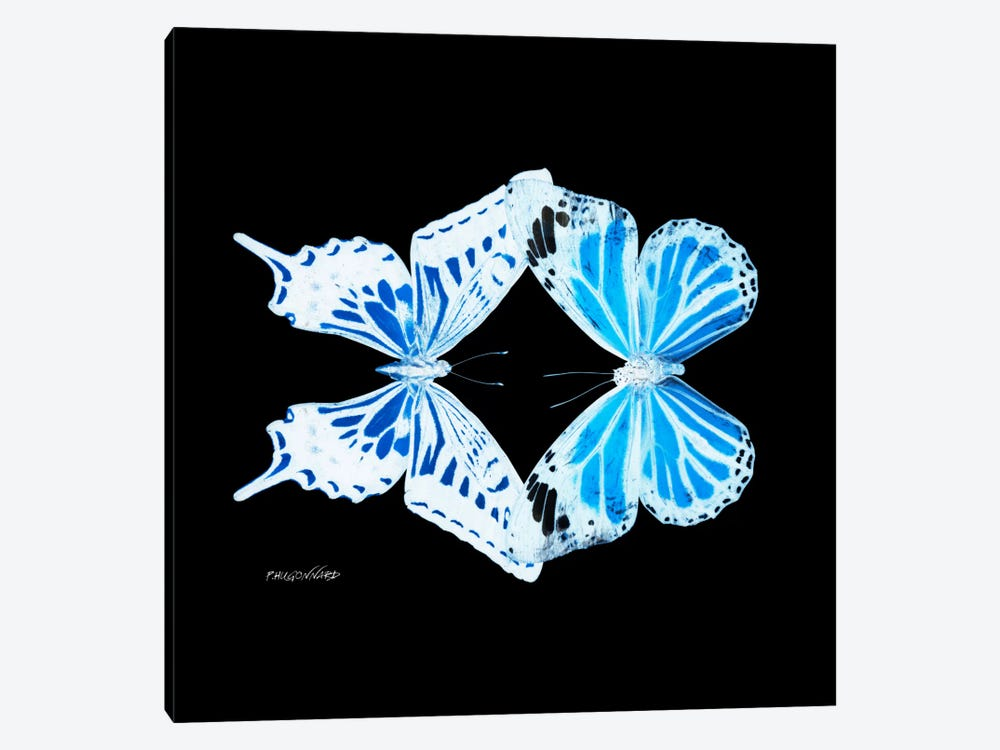 Miss Butterfly Xugenutia Duo X-Ray (Black Edition) by Philippe Hugonnard 1-piece Canvas Art