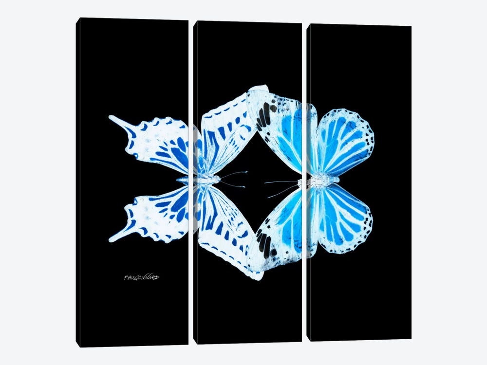 Miss Butterfly Xugenutia Duo X-Ray (Black Edition) by Philippe Hugonnard 3-piece Canvas Art