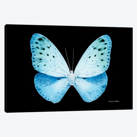 Miss Butterfly Euploea X-Ray (Black Edition) Canvas Print #PHD314} by Philippe Hugonnard Art Print