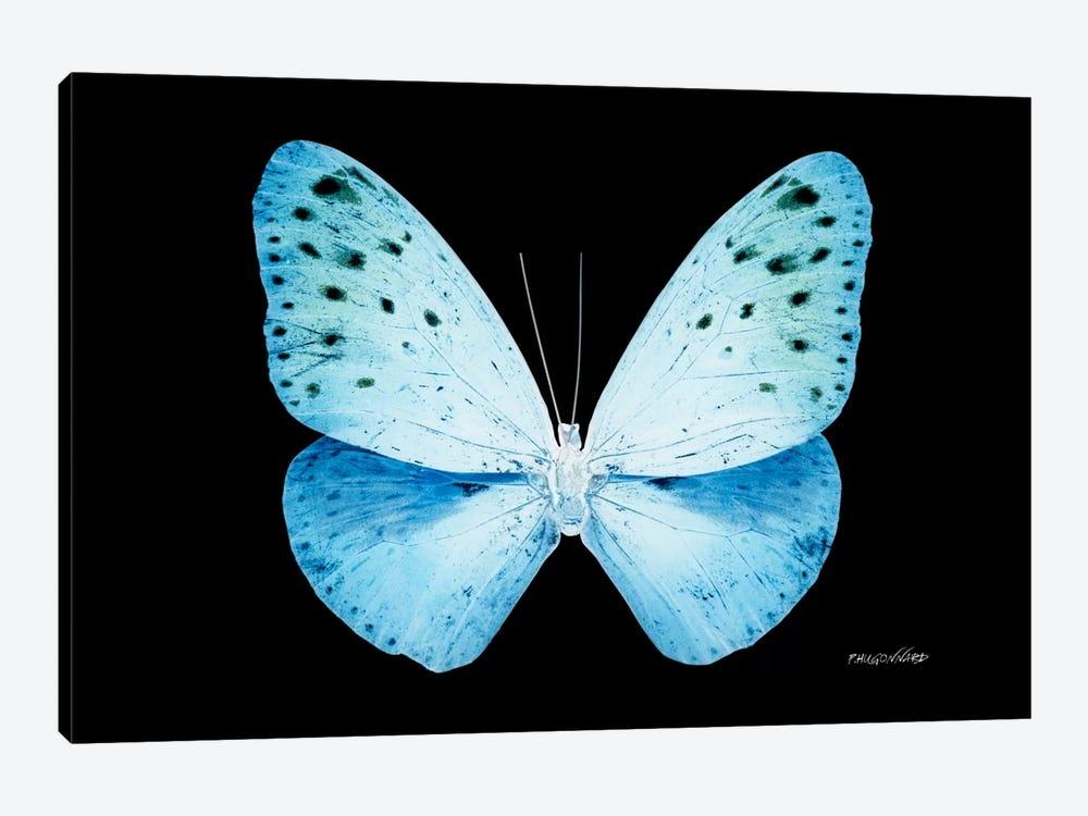 Miss Butterfly Euploea X-Ray (Black Edition) by Philippe Hugonnard 1-piece Art Print