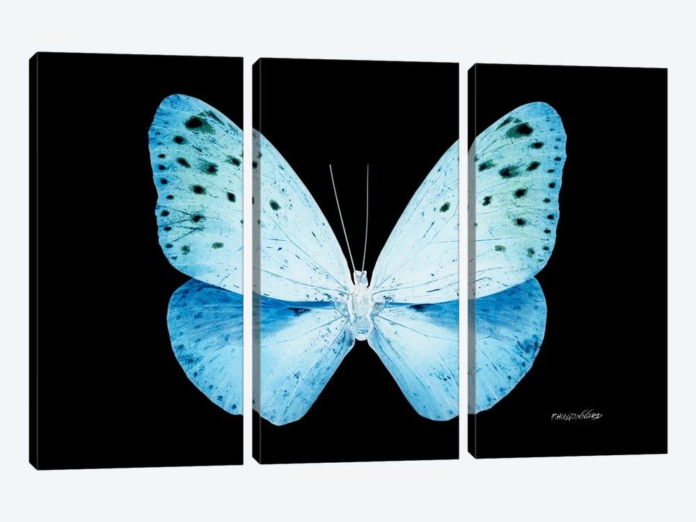 Miss Butterfly Euploea X-Ray (Black Edition) by Philippe Hugonnard 3-piece Art Print