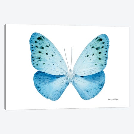 Miss Butterfly Euploea X-Ray (White Edition) Canvas Print #PHD315} by Philippe Hugonnard Canvas Art Print
