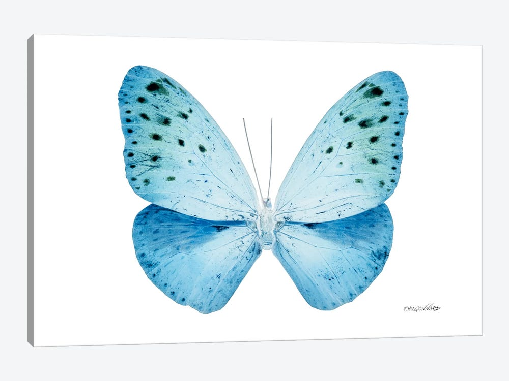 Miss Butterfly Euploea X-Ray (White Edition) by Philippe Hugonnard 1-piece Canvas Wall Art