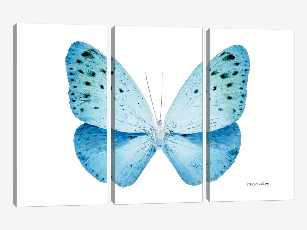 Miss Butterfly Euploea X-Ray (White Edition) by Philippe Hugonnard 3-piece Canvas Artwork