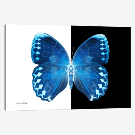Miss Butterfly Formosana X-Ray (B&W Edition) Canvas Print #PHD316} by Philippe Hugonnard Art Print