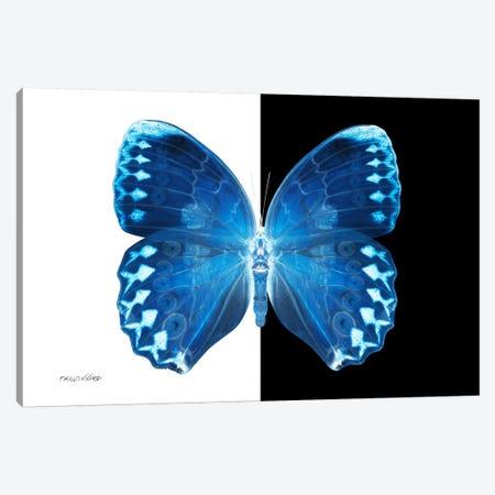 Miss Butterfly Formosana X-Ray (B&W Edition) Canvas Print #PHD316} by Philippe Hugonnard Art Print