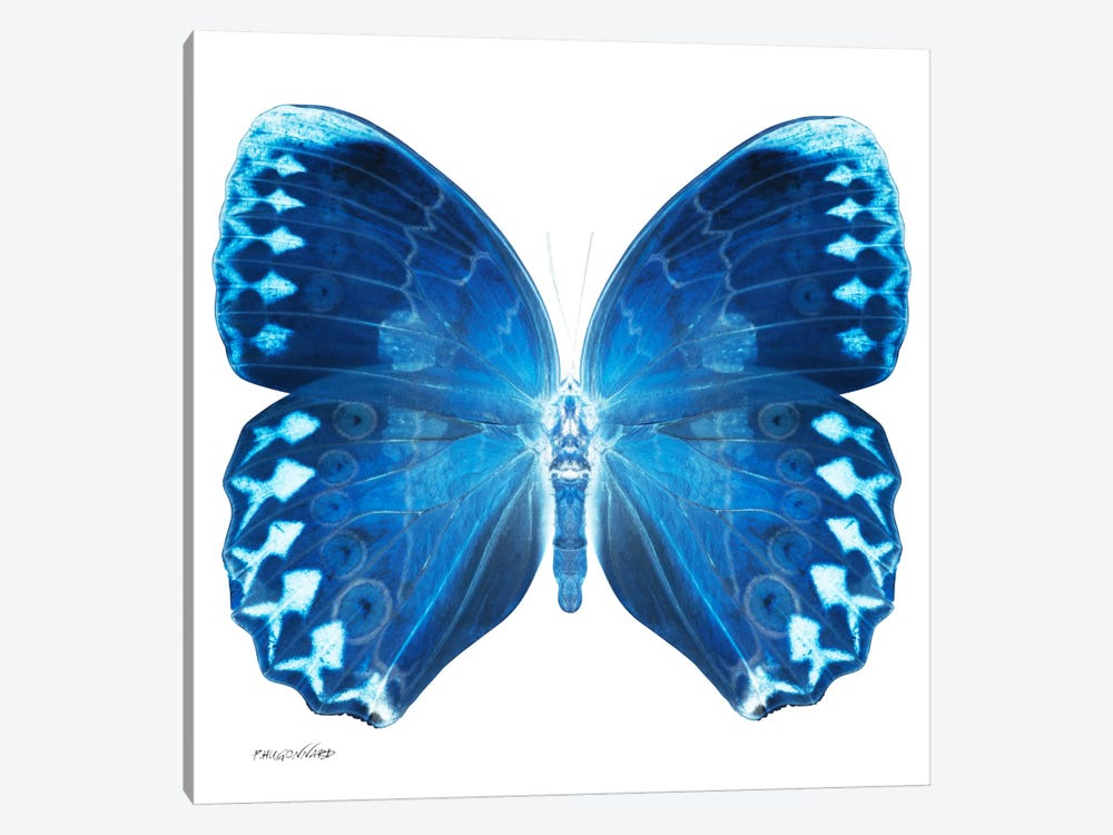 Miss Butterfly Formosana X-Ray (White Edition) by Philippe Hugonnard 1-piece Canvas Wall Art