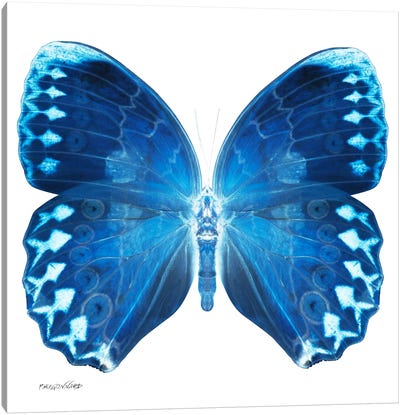 Miss Butterfly Formosana X-Ray (White Edition) Canvas Art Print