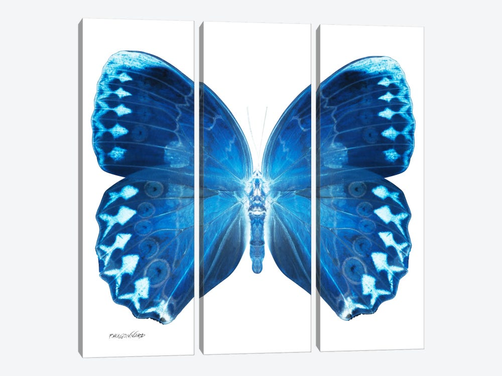 Miss Butterfly Formosana X-Ray (White Edition) by Philippe Hugonnard 3-piece Canvas Wall Art