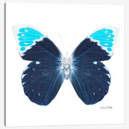 Miss Butterfly Hebomoia X-Ray (White Edition) Canvas Print #PHD318} by Philippe Hugonnard Canvas Art