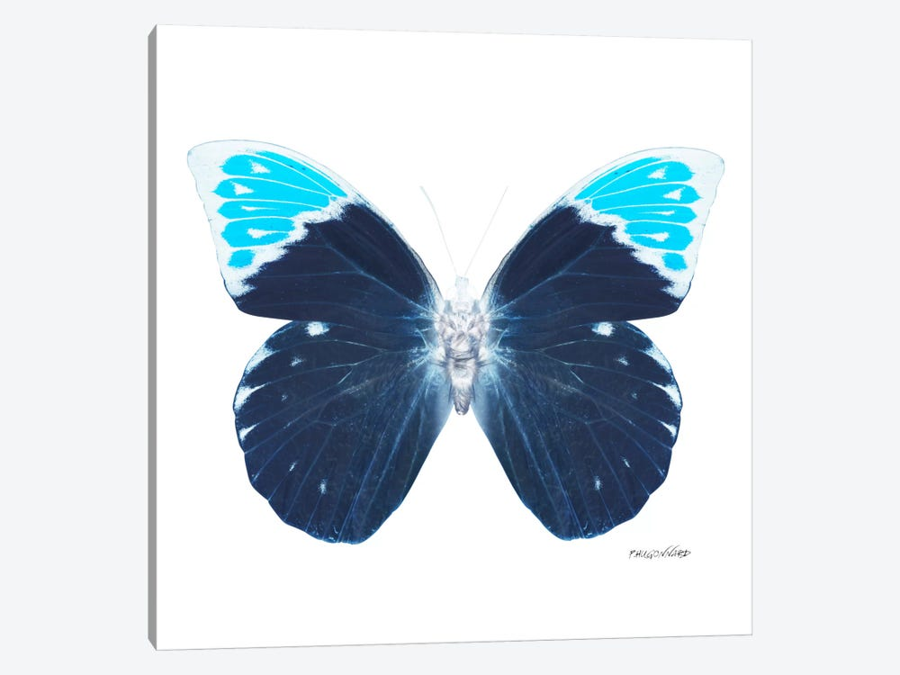 Miss Butterfly Hebomoia X-Ray (White Edition) by Philippe Hugonnard 1-piece Art Print