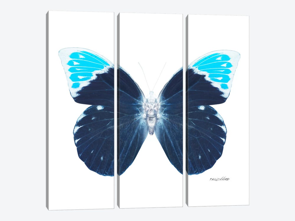 Miss Butterfly Hebomoia X-Ray (White Edition) by Philippe Hugonnard 3-piece Art Print