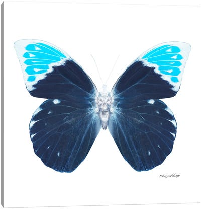 Miss Butterfly Hebomoia X-Ray (White Edition) Canvas Art Print