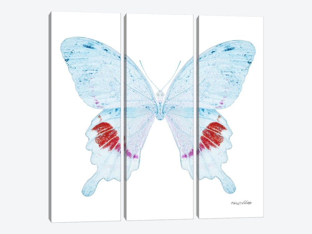 Miss Butterfly Hermosanus X-Ray (White Edition) by Philippe Hugonnard 3-piece Canvas Wall Art